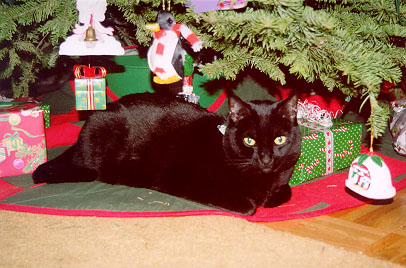 Gypsy under the Christmas Tree