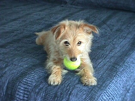Pebbles and her tennis ball